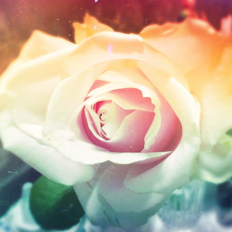 一輪の。お花(体調アップに)